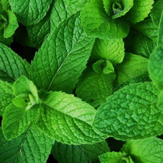 Capella Cool Mint Flavour Concentrate