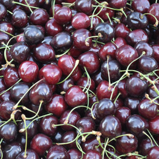 FLV Black Cherry